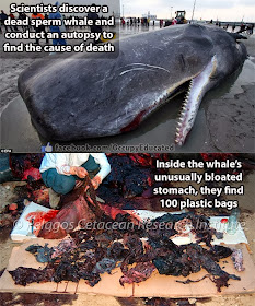 Gray whale dies bringing us a message - with stomach full of plastic trash
