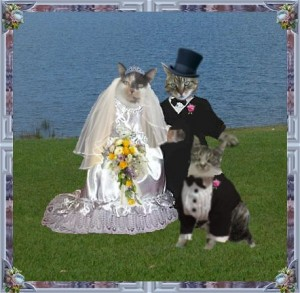 Cat Wedding Cool Videos. Funny videos, funny pictures and free games ...