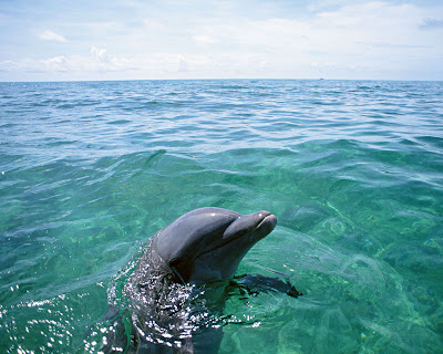 Dolphin_Wallpaper_02
