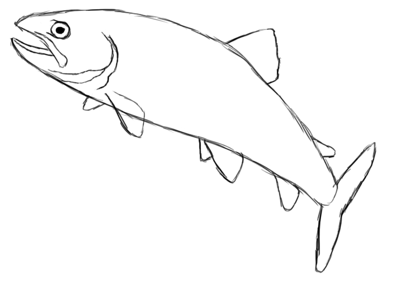 How to draw fish walleye for How to draw a fish