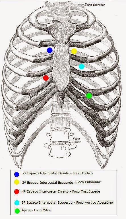 Resultado de imagem para focos aortico acessório de ausculta cardíaca