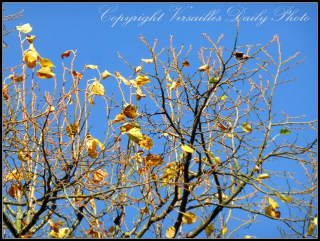 Versailles autumn golden leaves