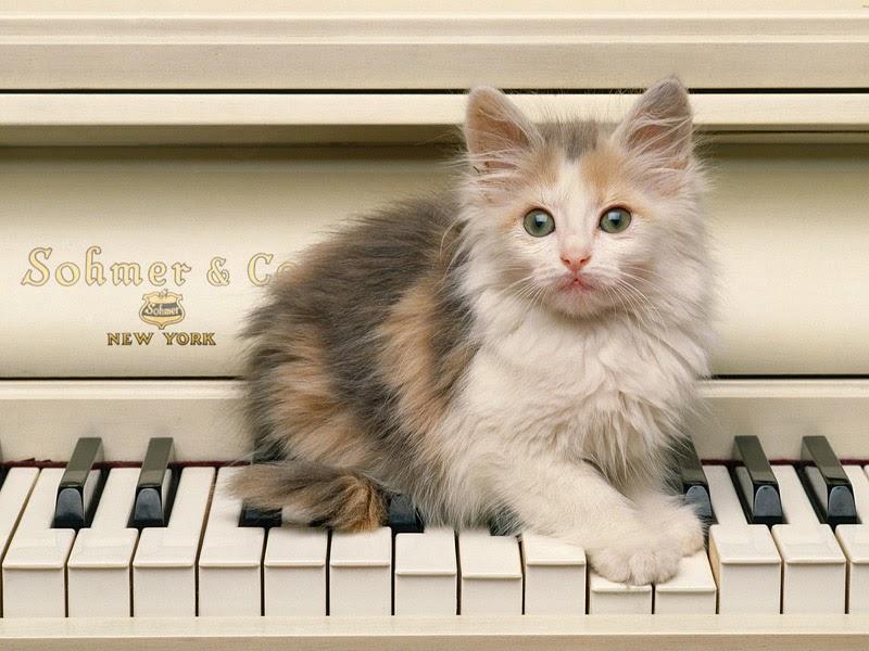 Pussy Cat 2