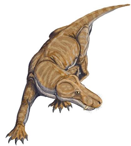 Рис. 1.Древние предки млекопитающих выглядели приблизительно так.  На рисунке: цинодонт- промежуточное звено между...