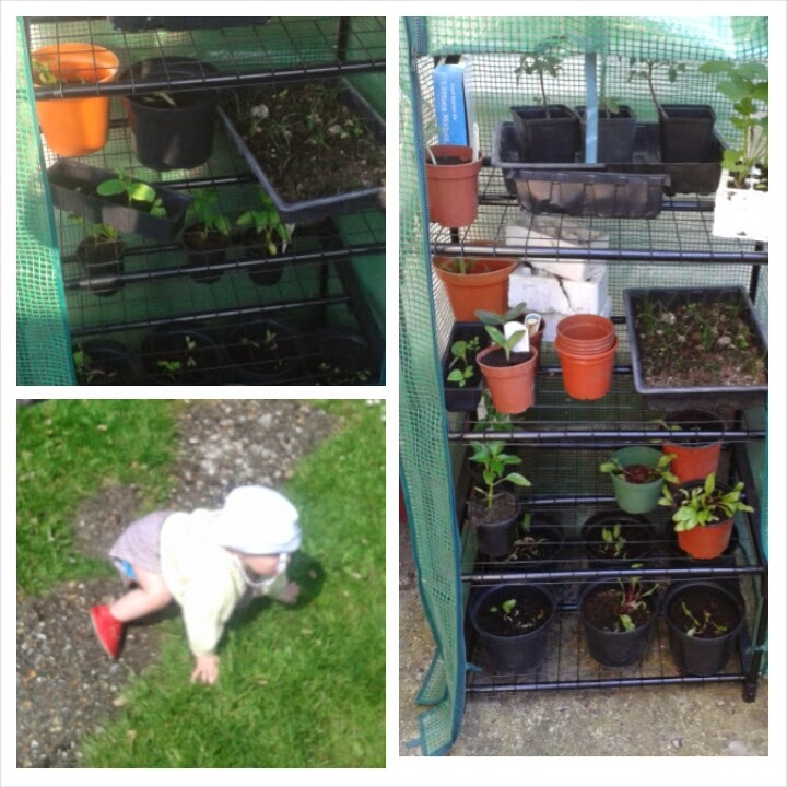 vegetables and fruit to sow in january