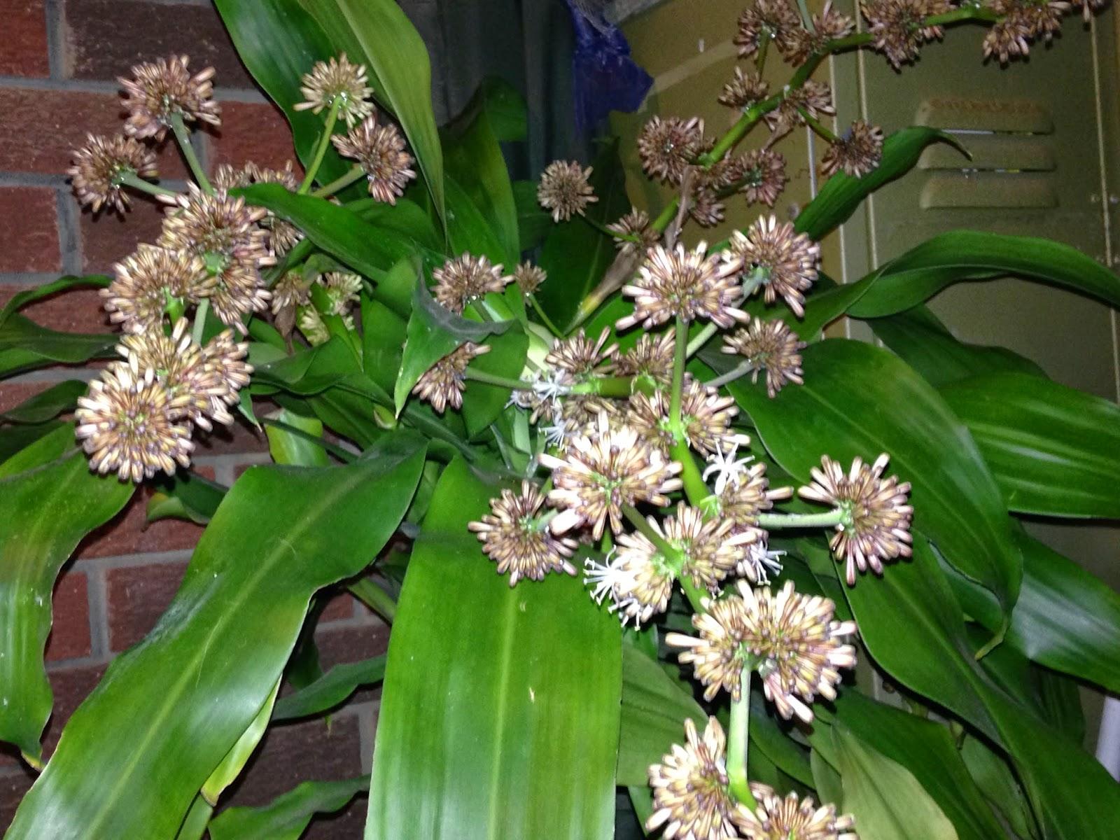 happy plant flower