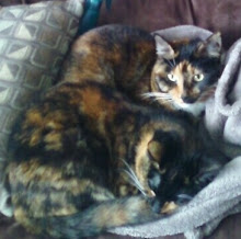 Madlynn & McKaela - A Tail of Two Kitties