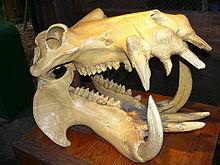 Museo Paleontologico di Serravalle del Chienti