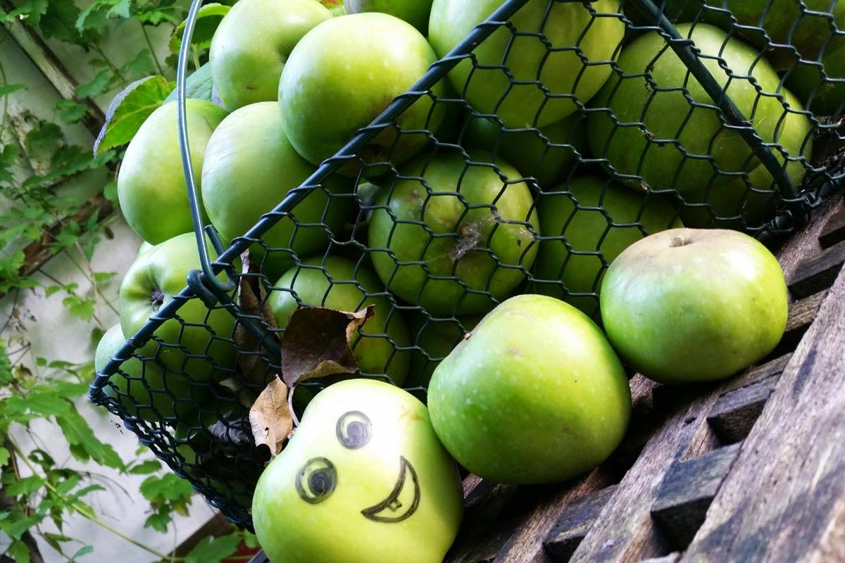 Apfelernte Hamburg, Glückliche Äpfel im Korb