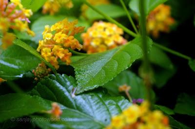 green leaf in flowers