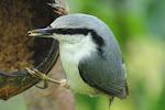 Oppskrifter på hjemmelaget fuglemat