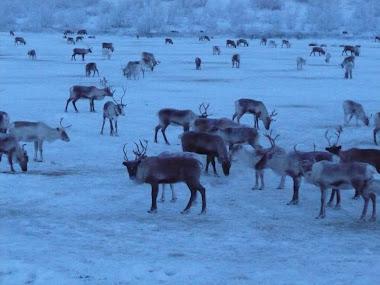 Unde esti,Rudolph?