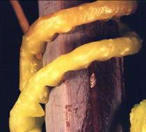 http://asalasah.blogspot.com/2012/12/8-kemampuan-keren-yang-dimiliki-tumbuhan.html