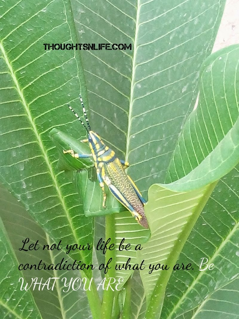 Thoughtsnlife:Let not your life be a contradiction of what you are. Be WHAT YOU ARE.