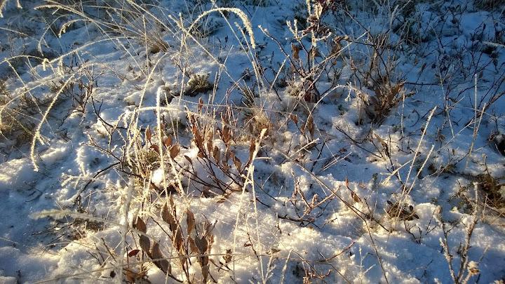 Talvi tulee hiljalleen