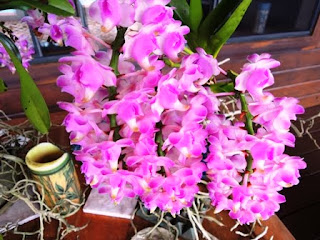 orchids, Akaka Falls State Park, Hawaii