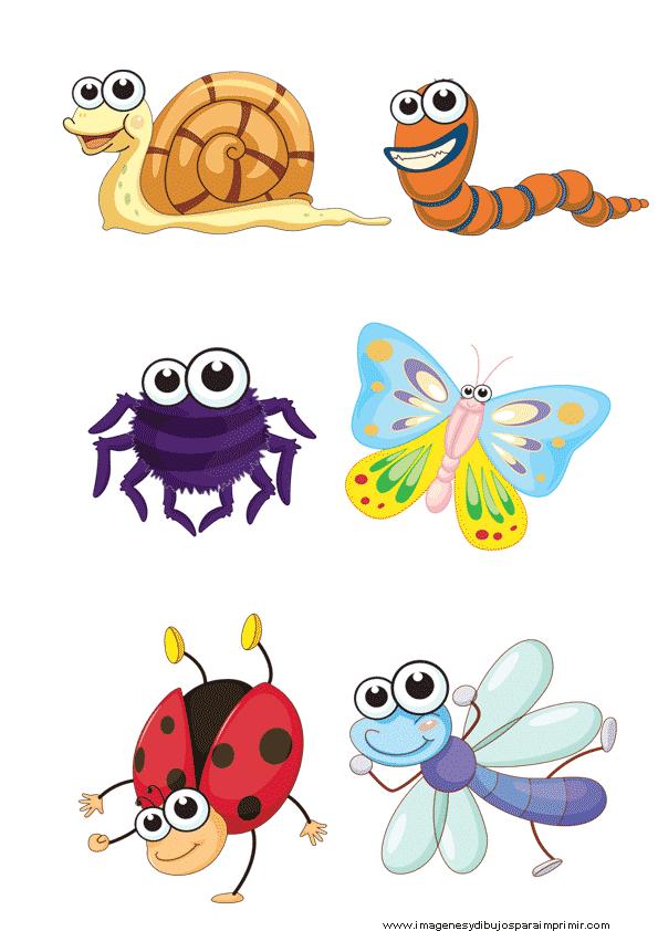 Laminas de insectos para imprimir imagenes y dibujos para imprimir - Fotos de insectos para imprimir ...