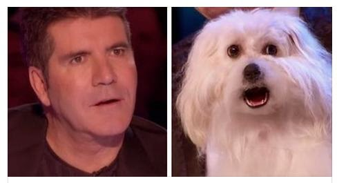 talking dog Wendy Britain's got talent