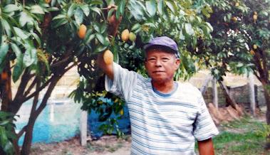 คุณสังเวียน เปรมปรี กับต้นมะยงชิดให้ผลผลิตผลดกผลใหญ่ รสชาติอร่อย