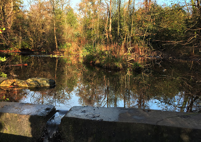 The pond in Pond Wood, Hawkwood Estate.  28 November 2015.