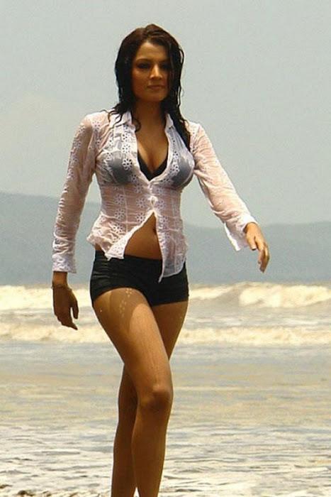 celina jaitley spicy actress pics