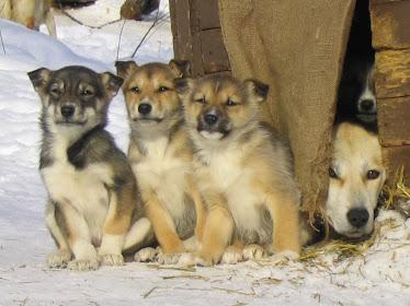 три сестренки и 1 братишка
