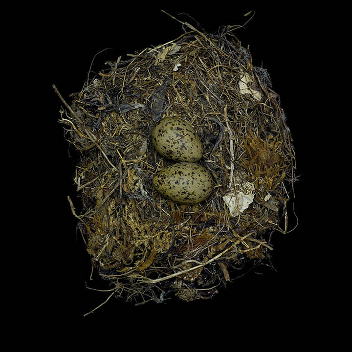 Birds Nest Photography by Sharon Beals ~ Rare Collections
