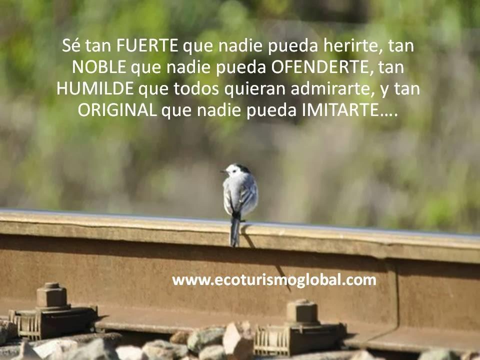 Ornitología Málaga