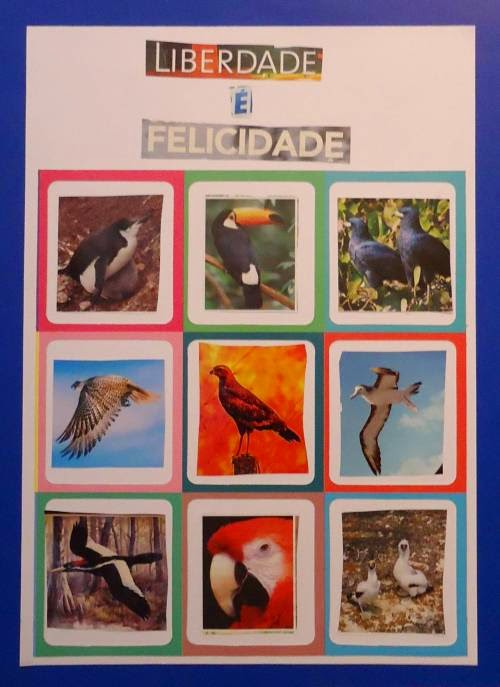 """""""Arte pela Liberdade das Aves do meu País"""""""