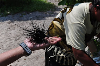 Playing with a sea urchin