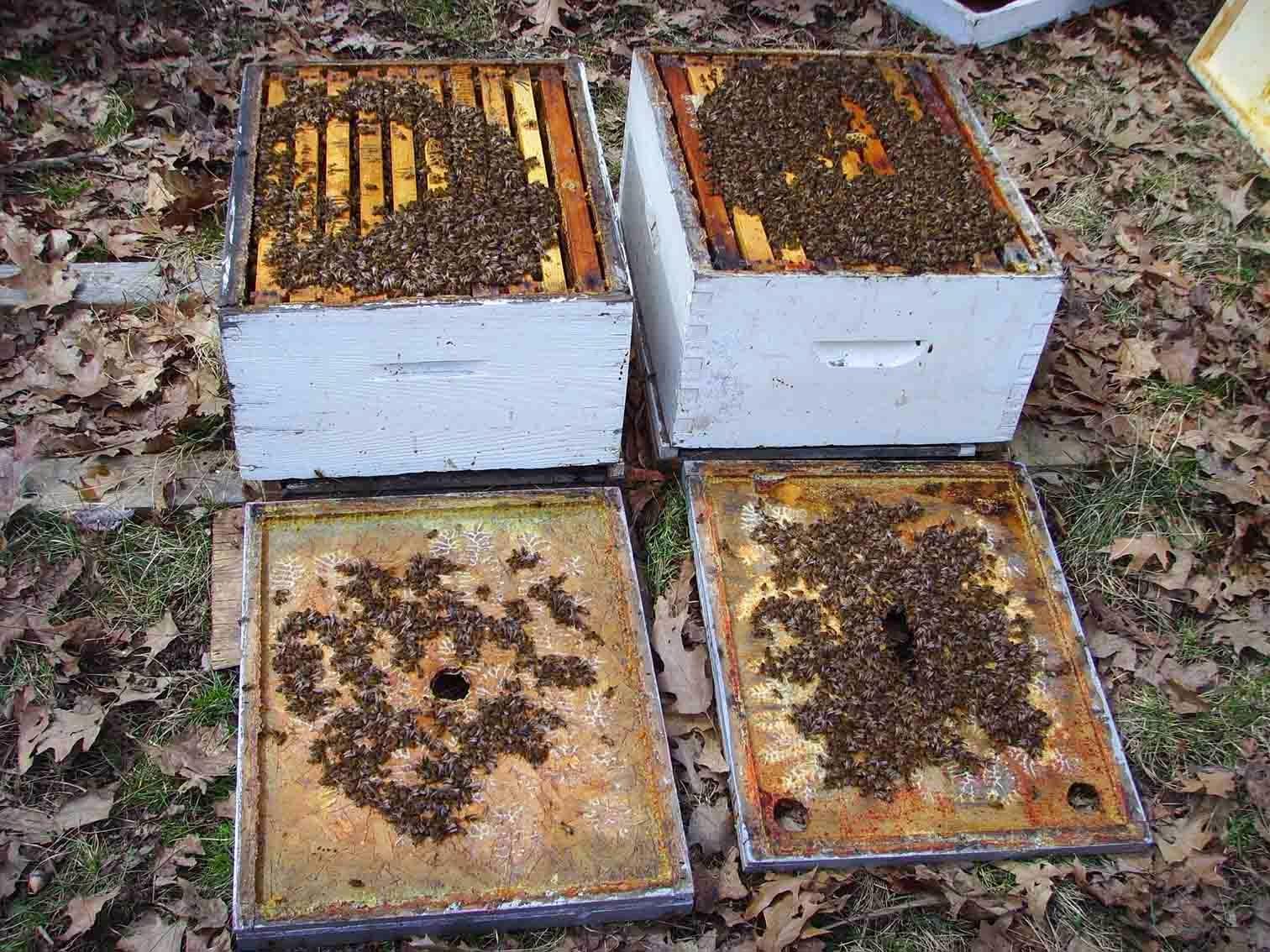 Канадское пчеловодство. Личный опыт: Галерея
