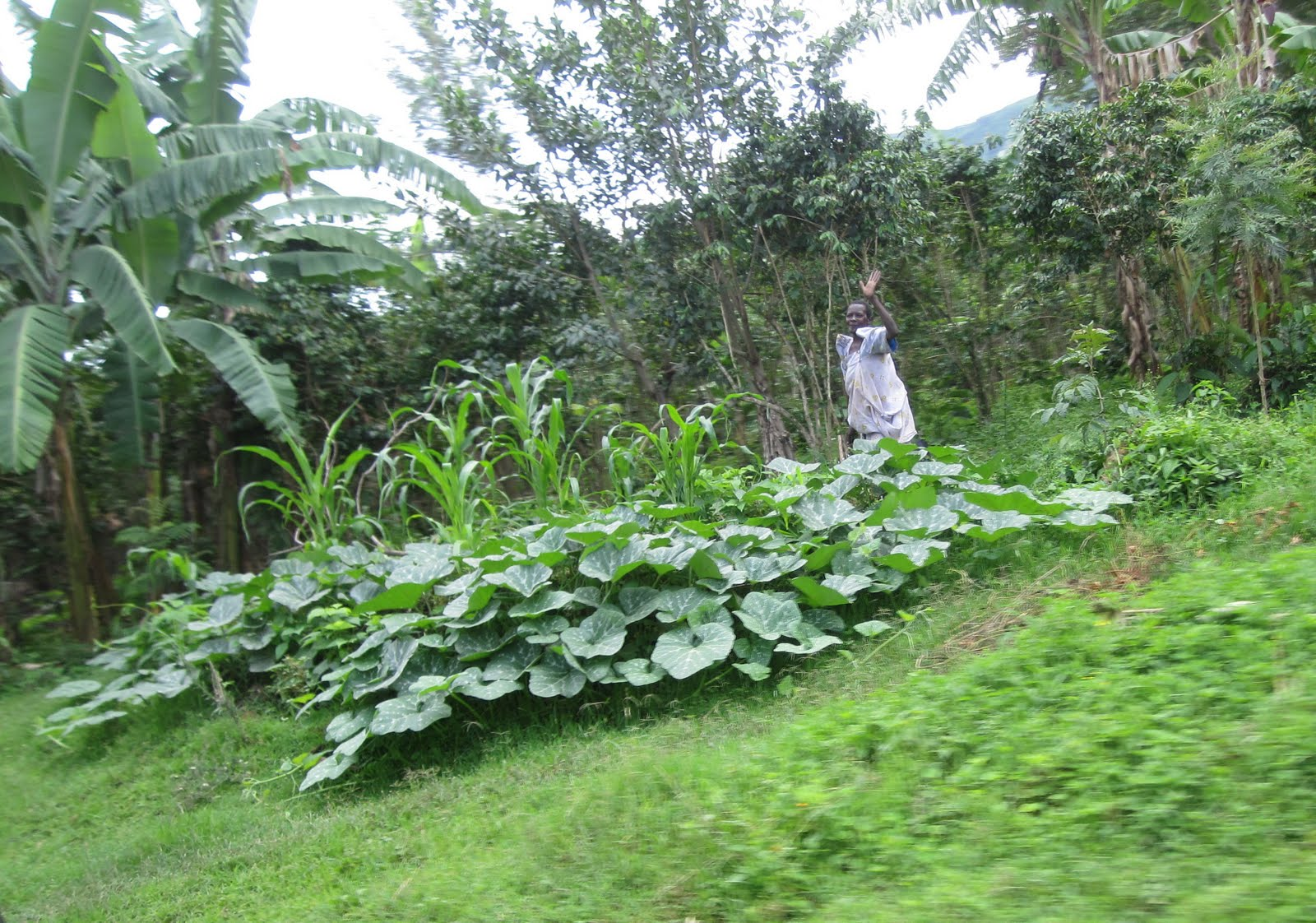 The Barlows In Uganda Mbale The Garden Of Eden Of Uganda