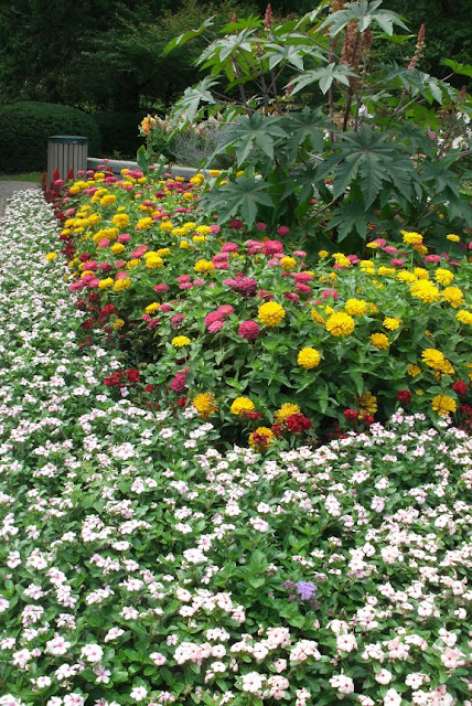 Catharanthus, zinnia and castor bean bedding plants at James Gardens Etobicoke by garden muses: a Toronto gardening  blog