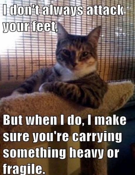 Scumbag Cat Logic