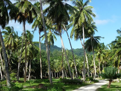 La Digue et Paysage