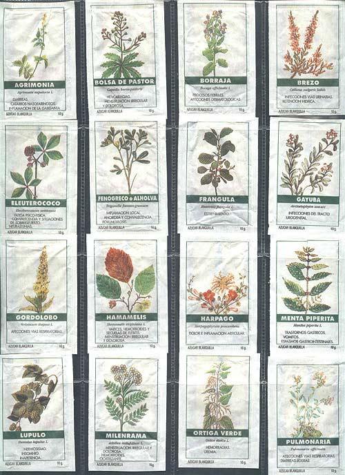 México de Colores Plantas Medicinales