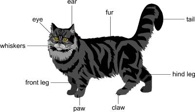 Part Grey Face Part Black Face Cat