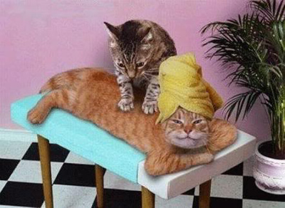 feline massage