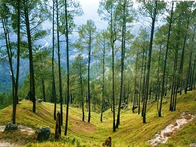 Almora - A popular hill station in Uttarakhand
