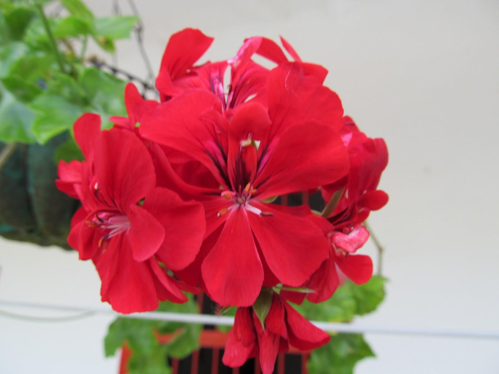 Plantas medicinales y ornamentales cer alto grande sede for Plantas medicinales y ornamentales