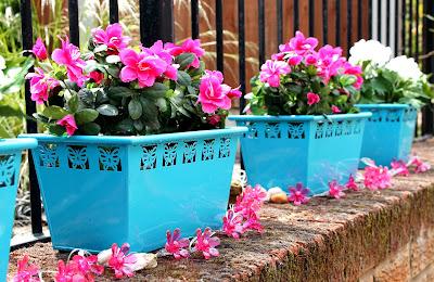 Brightening up the garden B&M