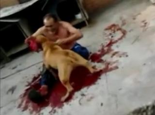 Anjing Makan Tuan,Anjing Gigit Tuan,Anjing Ganas,Anajing Gila,Anjing Serang Tuan
