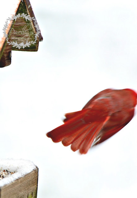 This cardinal flew away as quickly as he landed.