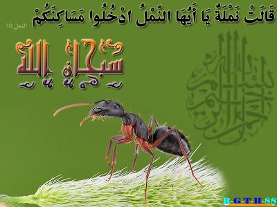 مجموعة تصاميم اسلامية من مختاراتى Deen%2003112011%20Apic