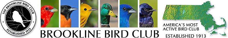 Brookline Bird Club