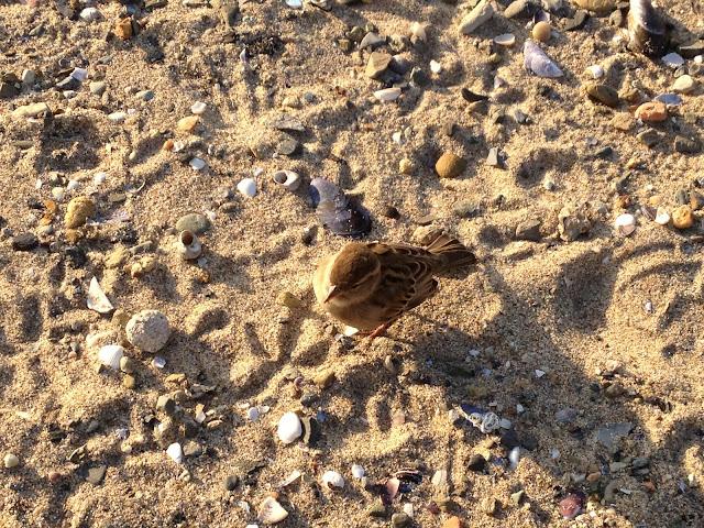 Kumsalda yanımızdan ayrılmadı