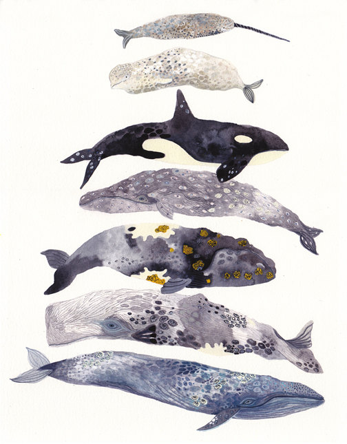Seven Whales Stacked by Michelle Morin