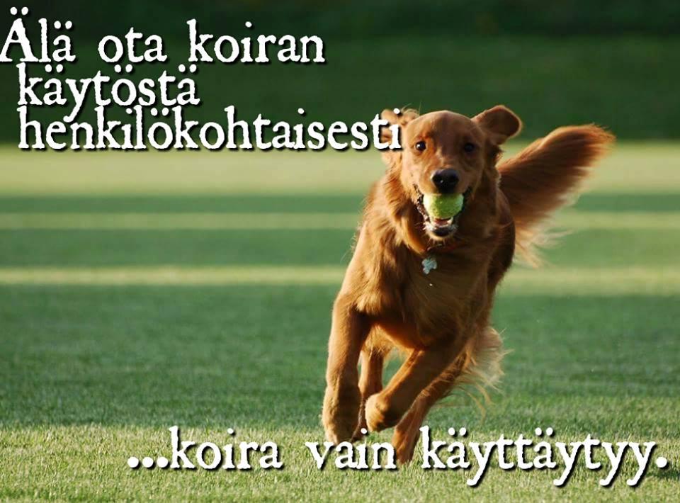 koiran anaalirauhastulehdus Kuopio