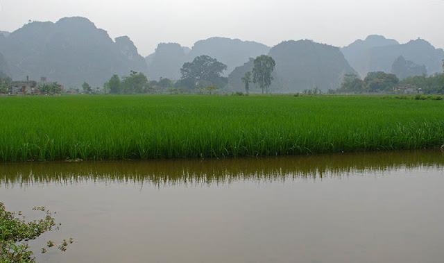Rizières à Ninh Binh, Vietnam