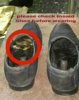 Dangerous Shoe
